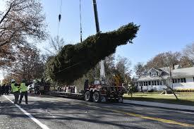 Christmas Tree Cutting Nj