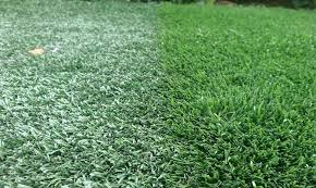 fake grass.  Grass One One Side Bright Green Grass Standing Tall On The Other Flattened Inside Fake Grass I