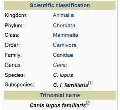 Dog Scientific Classification Chart Species Vs Subspecies A Quick Review Of Binomial Nomenclature