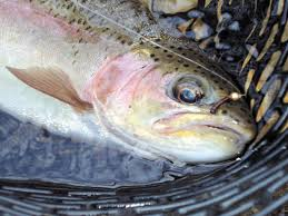 A Guide To Georgia Trout Fishing