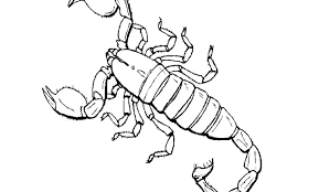 scorpion coloring free printable scorpion coloring pages for toddler animals page scorpion mortal kombat printable coloring scorpion coloring