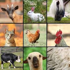 farm animals together. Fine Animals Large Collage With Farm Animals Put Together Stock Photo Picture And  Royalty Free Image Image 25739915