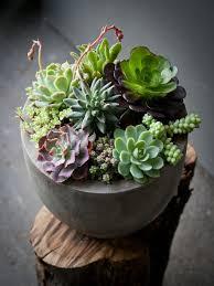 Indoor Succulents Garden