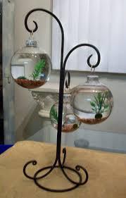marimo moss ball terrarium mixture of small stones plastic fish tank phenomenal photo