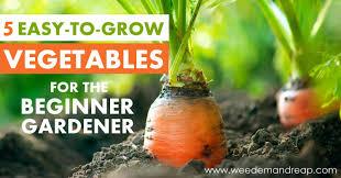 beginner gardening. 5 Easy-to-Grow Vegetables For The Beginner Gardener | Weed \u0027Em And Gardening G