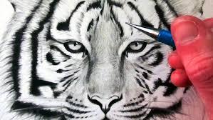 tiger face growling drawing. Wonderful Drawing How To Draw A Tiger Intended Face Growling Drawing G