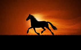 horses running in the sunset. Exellent Horses Horse Running Sunset Inside Horses In The