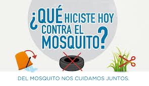 Resultado de imagen para mosquitos aedes aegypti