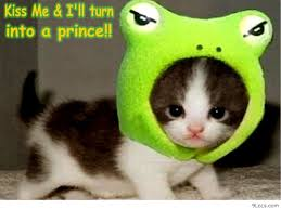 cute kittens quotes for kids. Exellent Quotes Funny Animal Quotes For Kids  Google Search With Cute Kittens Quotes For Kids E