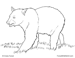 Learn Forest Animals Coloring Pages Grizzly