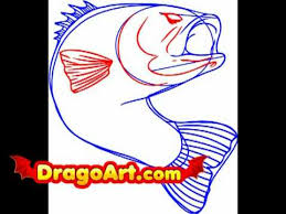 bass fish drawing step by step. Plain Step How To Draw A Bass Fish Step By And Bass Fish Drawing Step By