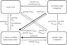 functional groups chart flow chart of coral reef benthic interactions transitions among