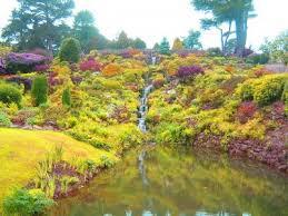 color garden. Color Schemes For Gardens: Creating A Monochromatic Garden O