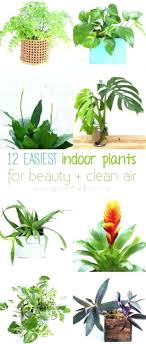 Image Houseplants Fullsize Of Antique Beauty Clean Air Office Office Room Artificial Office Plants Bris 618x1451 Surprising Office Avril Paradise Antique Beauty Clean Air Office Office Room Artificial Office Plants