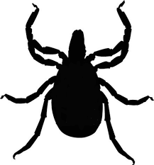 bug clipart black and white. tick bug clipart black and white