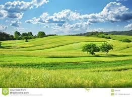 grass field. Grass Field E