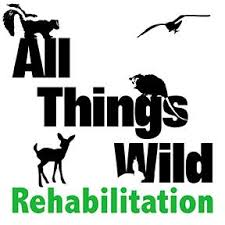 It's mealtime at ATW, and Ozzie is very... - All Things Wild  Rehabilitation, Inc.
