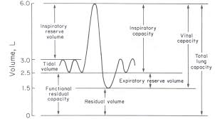Image Result For Label The Different Lung Volumes And