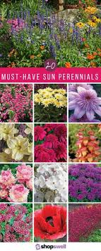 Small Picture Perennials Database Search 100s of Perennials Perennials
