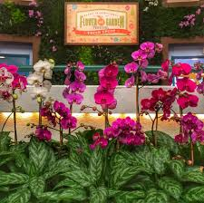 Kitchen Garden International Epcot International Flower Garden Festival Outdoor Kitchen Menu