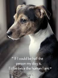 30 Dog Quotes That Will Melt Your Heart Dog Quotes Dog