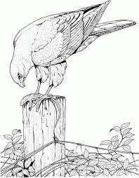 Realistic Bird Coloring Pages For Adults Enjoy Coloring 291148