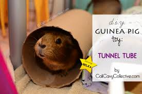 homemade guinea pig toy diy tunnel