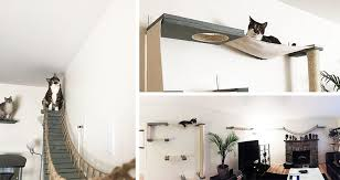 cat vertical space 101 the ultimate