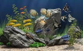 5D Marine Aquarium Theme Android Apps ...