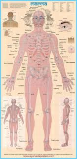 Marma Points Chart Marma Charts And Posters Ayurveda Posters
