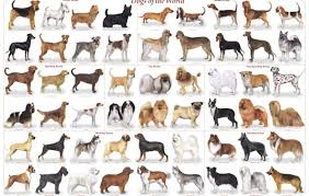 Small Dog Breeds Chart With Pictures Goldenacresdogs Com