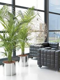 Living Room Plant Sustainablepals Org
