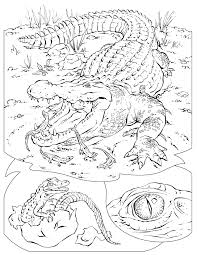 Small Picture Free Printable Alligator Coloring Pages For Kids Animal Place