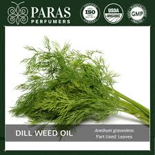 dill weed oil uses