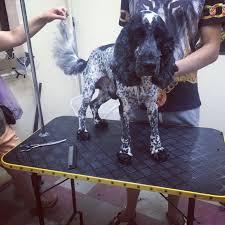 стрижка собак и кошек тримминг груминг салон красоты лападель