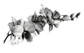 Orchidej 2návrhy Tetování Ornamenty Kresbičky Galerie