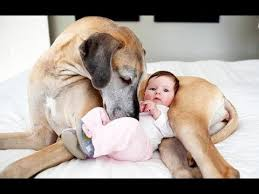 dogs and cats having babies. Perfect Cats Best Of Funny Cats And Dogs Meeting Babies For The First Time Compilation  2014 With Having