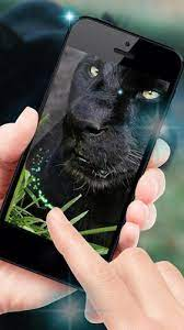 Black cheetah is part of the animals & birds wallpapers collection. Black Cheetah Live Wallpaper For Android Apk Download