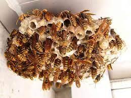 アシナガバチ に 巣 を 作ら せ ない 方法