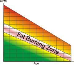 Fat Burning Zone And Cardio