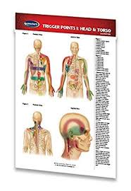 Head Reflexology Chart Trigger Points I Head Torso Pocket Chart Reflexology Quick Reference Guide By Permacharts