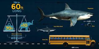 Shark Size Comparison Chart Megalodon Size How Big Was The Megalodon Shark Fossilera Com