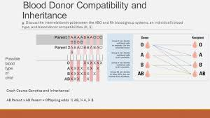 parent blood types chart parents blood types charts www topsimages com