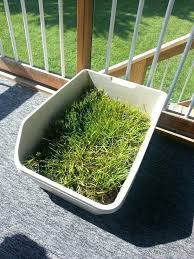 diy outdoor dog potty area patio dog potty dog potty patch with real grass great for diy outdoor dog potty area