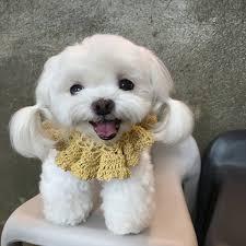 Image result for sunsim dog instagram