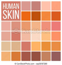 Human Skin Vector Various Body Tones Chart Realistic Texture Palette Color Cosmetic Graphic Element Illustration