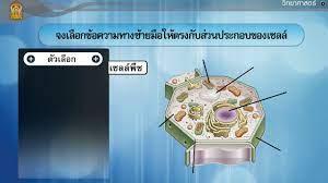 โครงสร้างของเซลล์ ตอนที่ 1 วิทยาศาสตร์ ม.1 - YouTube