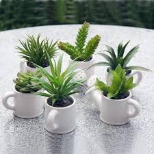 small office plant. Mini Cactus Plants Best 25 Small Ideas On Pinterest Office Plant