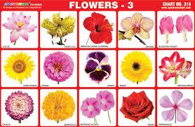 Marathi Flower Chart Marathi Language