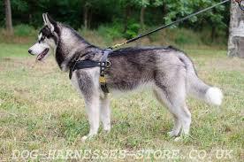 tracking dog harness uk